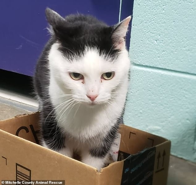 «Худшую кошку в мире» забрали из приюта Северной Каролины, несмотря на ее известное плохое поведение