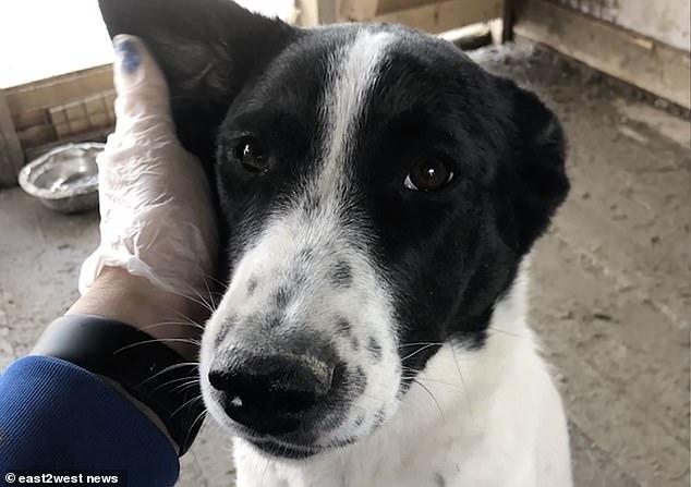 Пара взяла «милую» собачку из приюта для животных в России – а затем «забили ее до смерти и поджарили, когда они вернулись домой»