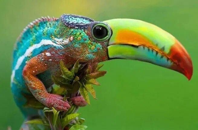 Странные новые существа, сделанные с помощью Photoshop