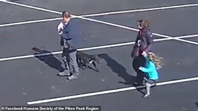 Ужасный момент безнадзорная собака нападает на пятилетнюю девочку на парковке церкви в США