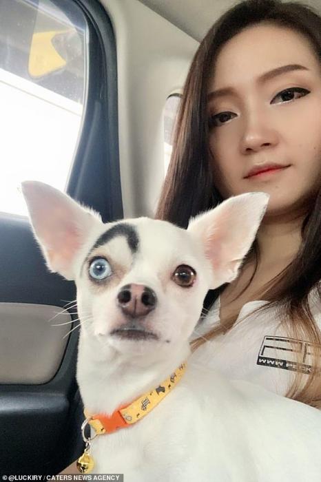 Собака всегда подозрительно смотрит на своего хозяина благодаря смешной черной метке над глазом