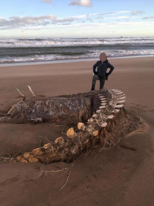 Гигантский гниющий скелет «Несси» вымыло на шотландском пляже во время шторма Сиара