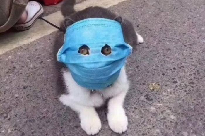 Китайская кошка носит самодельную маску для мордочки, так владелец защищает кошечку от коронавируса