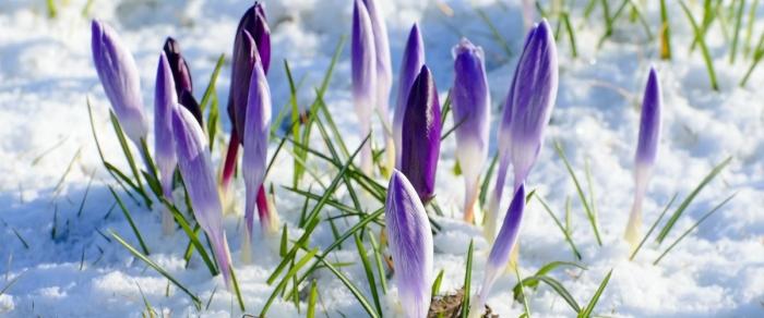 Синоптики рассказали об аномальной погоде в марте
