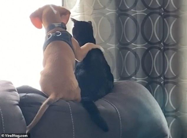 «Мне белки, тебе птицы»: очаровательный щенок бигля прижимается к коту, когда пара смотрит в окно сада и мечтает