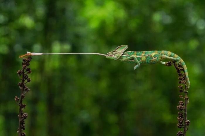 Потрясающие фото дикой природы со всего мира