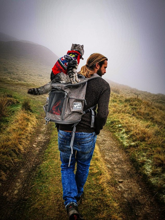 Знакомьтесь с котом, который лазает по горам и любит гулять со своими хозяевами и их любимыми собаками