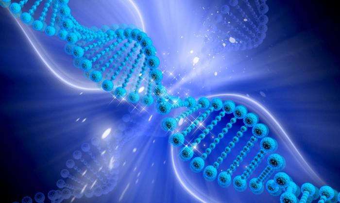 Обнаружены гены, которые начинают работать только после смерти человека