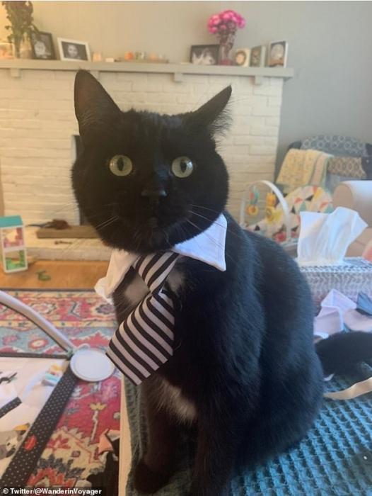 Владельцы показали фото своих кошек, которые очень серьезно относятся к советам по предохранению от коронавируса.