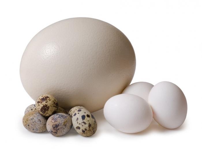 Специалисты выяснили, какое яйцо домашней птицы самое полезное