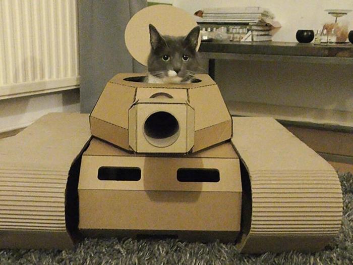 Воинствующие кошки радостно захватывают дома своих владельцев в картонных бронемашинах