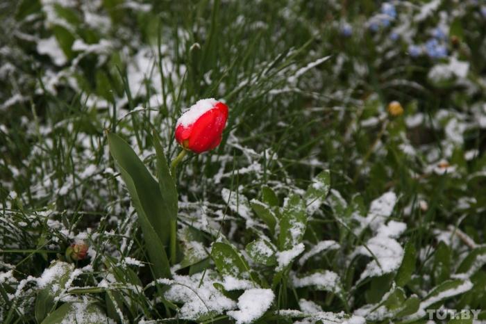 Синоптики обещают снег в мае