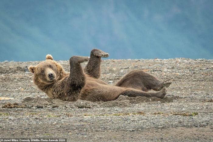 Расслабленный медведь, львята-боксёры и влюблённые птички – претенденты на премию Comedy Wildlife Photography Award