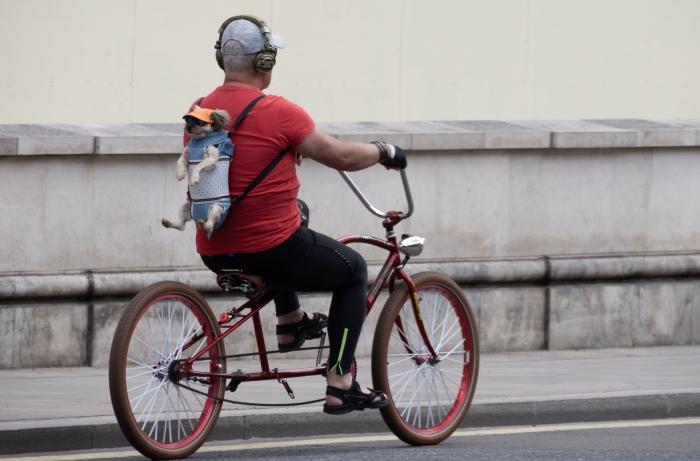 Избалованная собака занимает заднее сиденье, в то время как её владелец ведёт велосипед