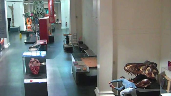 Студента засняли на камеру, когда он вломился в музей, чтобы сфотографироваться с динозаврами