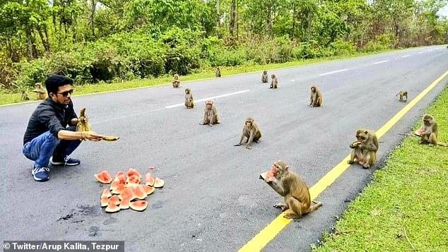 Обезьяны в Индии пришли за питанием и выстроились на перекус по социальной дистанции, наверно, чтобы не заразится коронавирусом