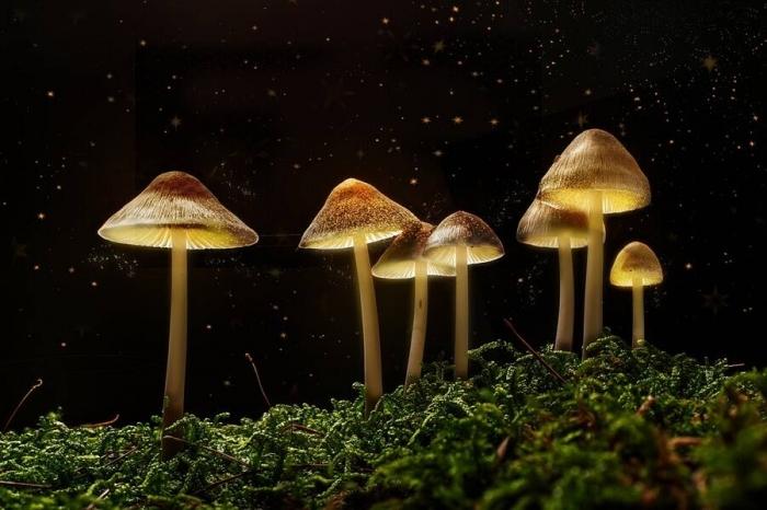 Галлюциногенные грибы запускают «смерть эго», которую можно использовать для лечения депрессии, говорится в исследовании