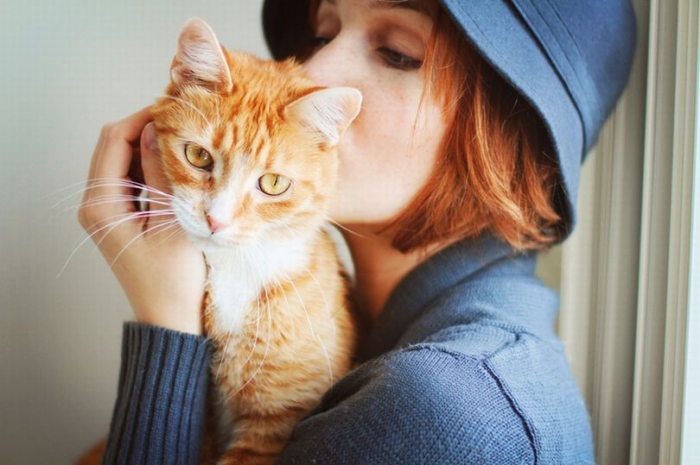 Милые кошки должны быть предписаны англичанам врачами, чтобы вылечить одиночество, говорят депутаты