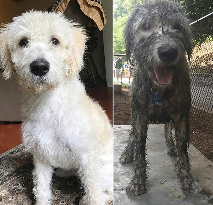 Владельцы собак делятся смешными картинками своих собак после того, как они вывалялись в грязи