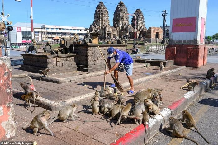 Люди стараются отобрать город от обезумевших от секса обезьян, голодавших во время карантина