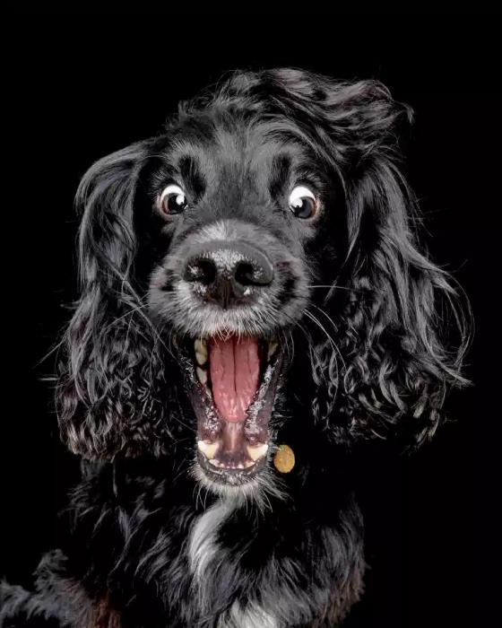 Смешные фото голодных собак, когда они пытаются поймать вкусные угощения