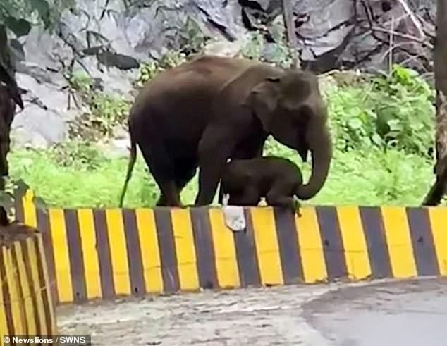 Мать-слониха подталкивает своего слонёнка, когда он изо всех сил пытается перелезть через придорожный бурдюр