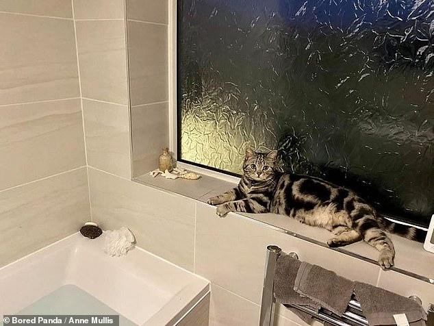 Веселые картинки смешных кошек, которые чувствуют себя как дома