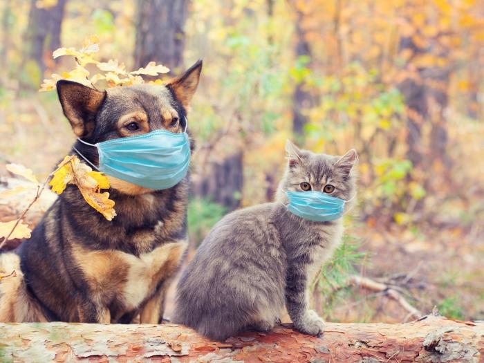 Домашние животные чувствовали себя прекрасно во время пандемии
