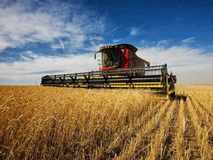 К 2028 году Россия будет владеть 20% всего мирового экспорта зерна