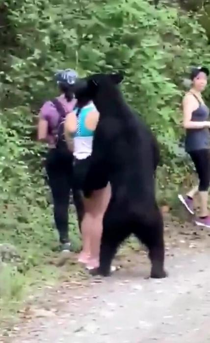 Страшный момент, черный медведь приближается к смелым туристам сзади, когда они позируют для селфи
