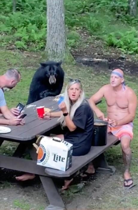 Невероятный момент дикий черный медведь случайно присоединяется к людям покушать бутербродов с арахисовым маслом в Мэриленде