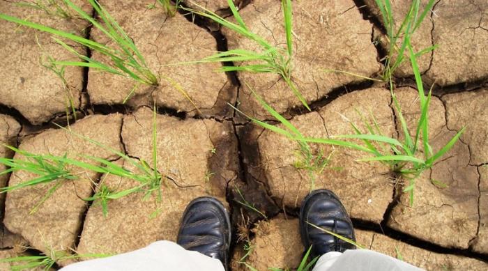 Страна-зернокосилка: Россия завоёвывает рынки зерна