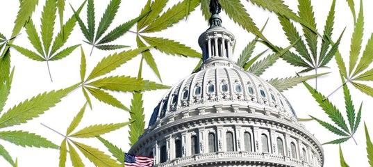 Конгресс США планирует легализовать марихуану во всех штатах