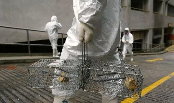 Китай объявляет чрезвычайную ситуацию из-за бубонной чумы, поскольку случаи Черной смерти быстро распространяются