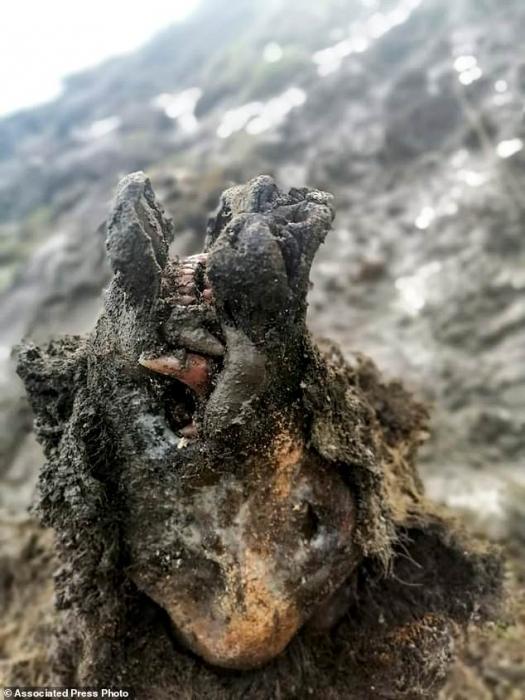 Прекрасно сохранившийся пещерный медведь из Ледникового периода был найден в заполярной России