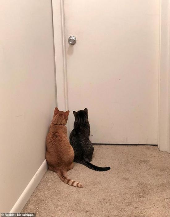 Смешные картинки кошек, мало заботящихся о личной жизни своих хозяев