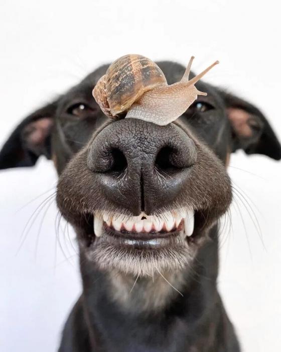 Собака стала знаменитой в Инстаграм балансируя случайными предметами на носу на очаровательных картинках