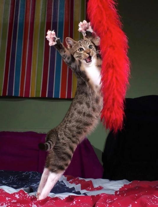 Кот подражает легенде киноужасов Альфреду Хичкоку. Он соревнуется за комедийный приз в размере 3000 фунтов стерлингов