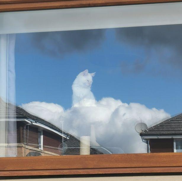 Невероятная оптическая иллюзия превращает кошку в «своего рода Бога»