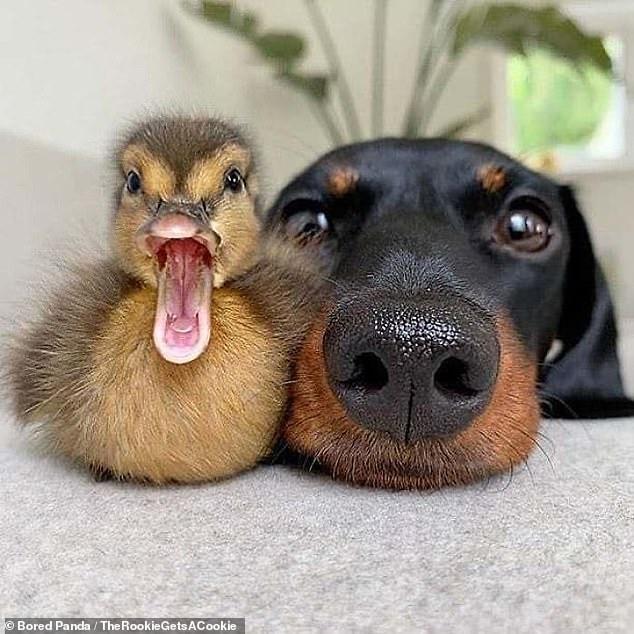 Лучшие друзья навсегда! Трогательные картинки запечатлели дружбу животных, которая маловероятна