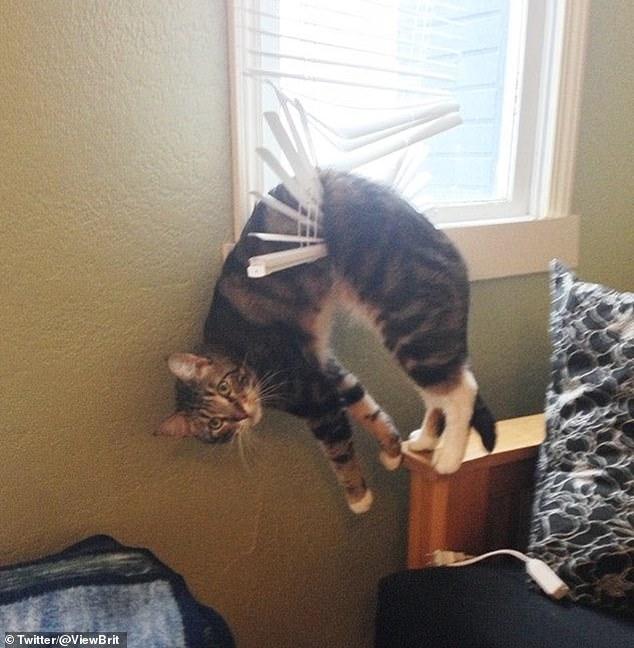 Владельцы поделились картинками своих кошек - в том числе и той, где кошка оказалась пойманной в жалюзи
