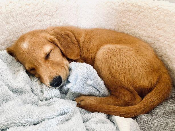 Победители фотоконкурса собак Star Paws появились в календаре на 2021 год