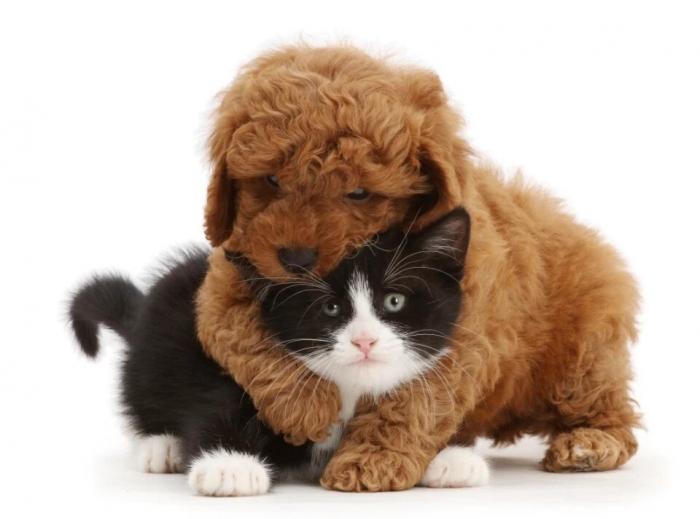 Кошки и собаки подружились несмотря на свои различия на очаровательных фото