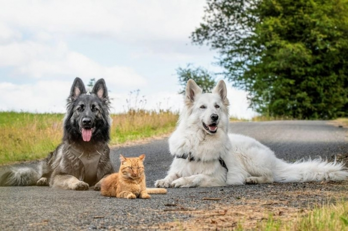 Очаровательный спасённый кот, которого взяли к себе две собаки, теперь тоже думает, что он собака
