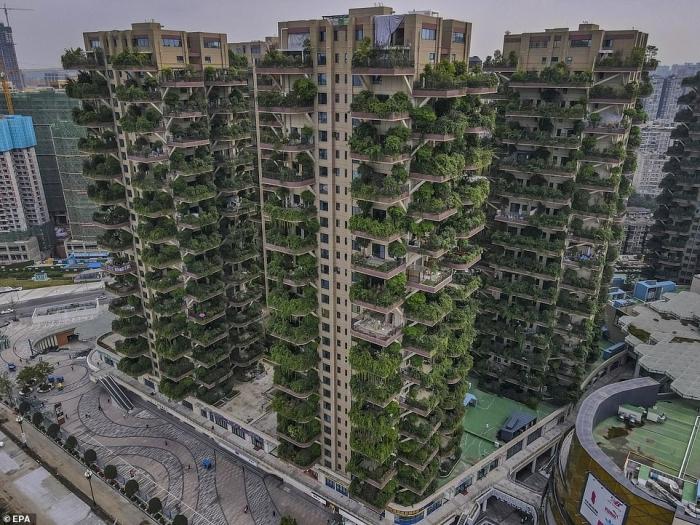 Жители китайского жилищного проекта «вертикальный лес» стараются его избегать, потому что деревья привлекли массу комаров