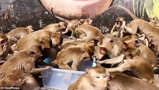 Голодные обезьяны колдуют над коробкой хлеба в тайском городе, где бунтуют тысячи макак