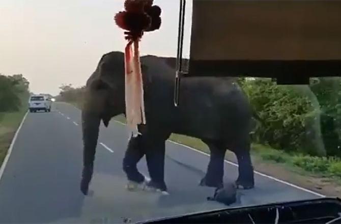 Вирусное видео показывает, как слон останавливает автобус и собирает еду в качестве «платы за проезд»