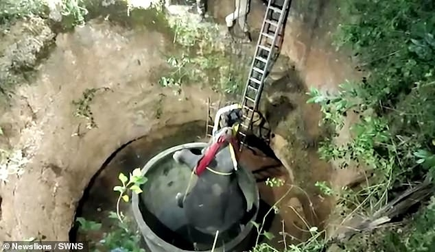 Молодого слона поднимают в безопасное место после того, как он упал в колодец глубиной 15 метров, преследуемый собаками в Индии