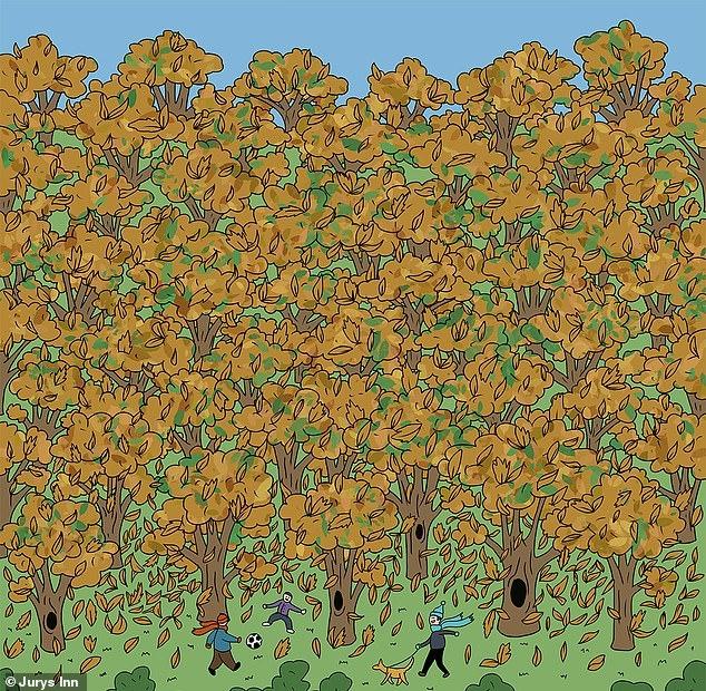 Можете ли вы найти белку, прячущуюся среди деревьев на этой осенней картинке?
