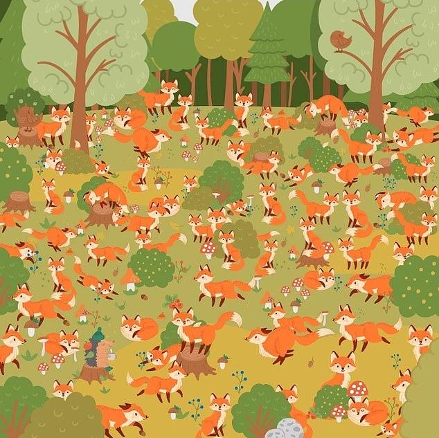 Зрительная загадка бросает вам вызов. Можете ли вы найти голубоглазую лису, прячущуюся среди множества лис и побить рекорд 25 секунд